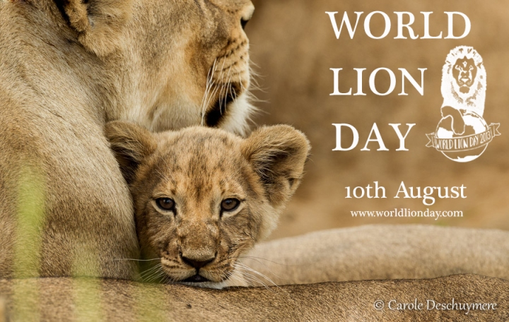 WORLD LION DAY 2013 wld-cd-poster1