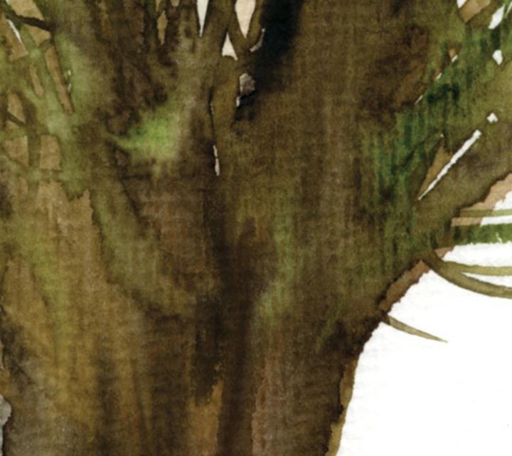 FORTUNE TREE#2 det2 ©Marina Kanavaki