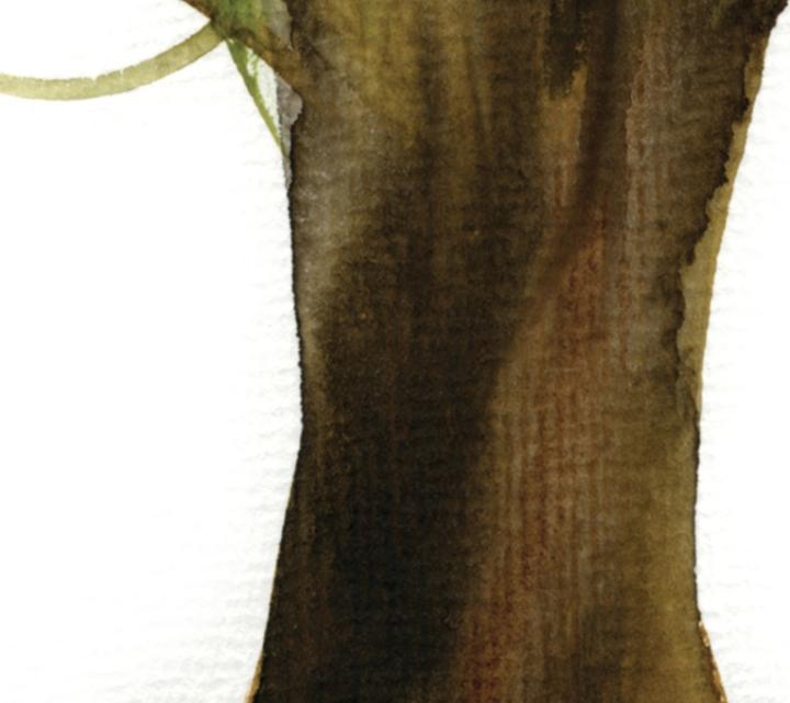 FORTUNE TREE#2 det3 ©Marina Kanavaki