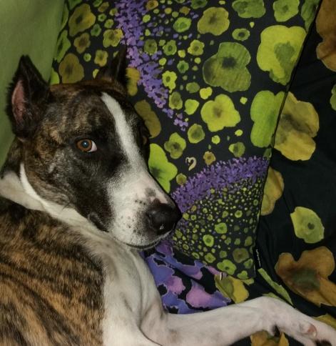Hera on my throw pillow
