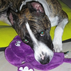 Hera and her purple elephant