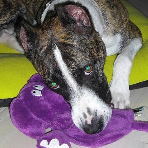 Hera and her purple elephant