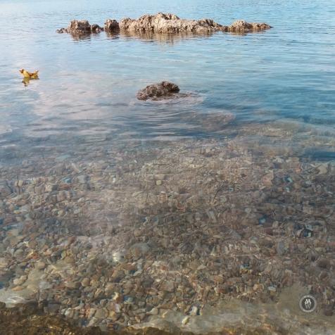 20170919_170303sinking rocks&leaf