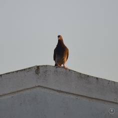 DSC_0106 (1)BirdWatching