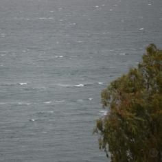 DSC_0145 (1)Rain