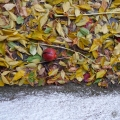 20171114_145012Leaves&Pomegranate