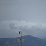 DSC_0343 (1)bluryBirdRain