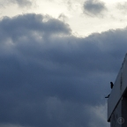 DSC_0520 (2)CloudySunrise+TwoBirds