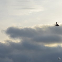 DSC_0525 (2)Gotcha!SunriseBird