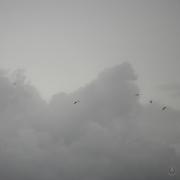 DSC_0588 (1)Fleeing