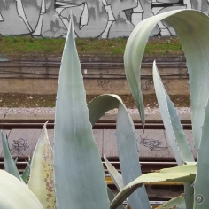 20171201_082453CactusRailTracks