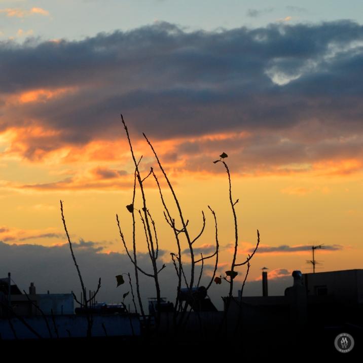 DSC_0870 (1)Sunrise06122017