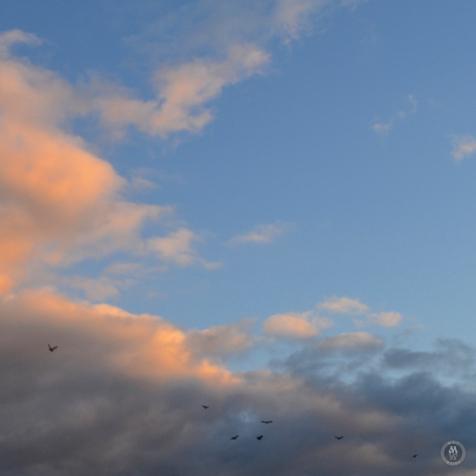 DSC_0876 (1)BirdsFlying