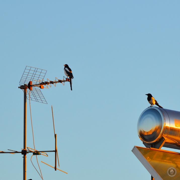 DSC_0901 (1)Birds08122017