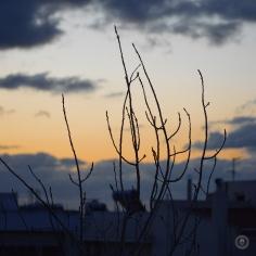 DSC_1164 (1)Sunrise26012018